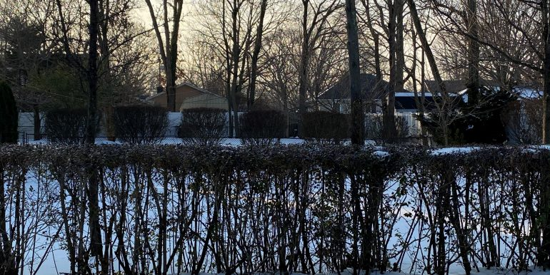 Yard.hedges